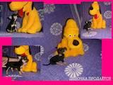 Собаки, щенки Карликовый пинчер, цена 2000 Грн., Фото