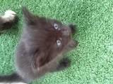 Кошки, котята Разное, цена 100 Грн., Фото