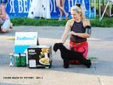 Собаки, щенята Цвергшнауцер, ціна 6000 Грн., Фото