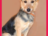 Собаки, щенки Беспородная, цена 3 Грн., Фото
