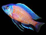 Рибки, акваріуми Рибки, ціна 5 Грн., Фото
