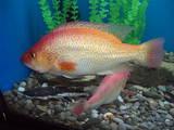 Рыбки, аквариумы Рыбки, цена 500 Грн., Фото