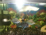Рыбки, аквариумы Рыбки, Фото