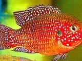 Рыбки, аквариумы Рыбки, цена 5 Грн., Фото