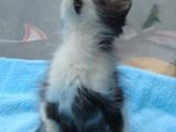 Кошки, котята Разное, цена 2 Грн., Фото