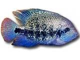 Рибки, акваріуми Рибки, ціна 140 Грн., Фото