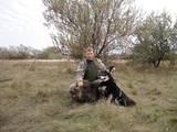 Собаки, щенки Восточно-Сибирская лайка, цена 2300 Грн., Фото