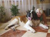 Собаки, щенки Московская сторожевая, цена 2400 Грн., Фото