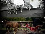 Перевезення вантажів і людей,  Пасажирські перевезення Таксі і найм авто з водієм, ціна 1 Грн., Фото