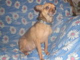 Собаки, щенята Різне, ціна 2500 Грн., Фото