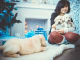 Собаки, щенята Гладкошерста ретрівер, ціна 3000 Грн., Фото
