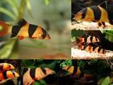 Рыбки, аквариумы Рыбки, цена 24 Грн., Фото
