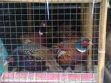 Папуги й птахи Різне, ціна 120 Грн., Фото
