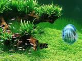 Рыбки, аквариумы Установка и уход, Фото