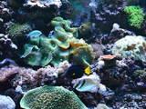 Рыбки, аквариумы Аквариумы и оборудование, цена 150 Грн., Фото