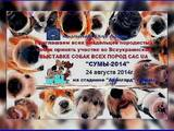 Собаки, щенята Заняття, тренування, ціна 150 Грн., Фото
