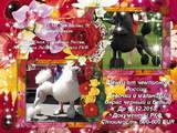Собаки, щенки Большой пудель, цена 2000 Грн., Фото