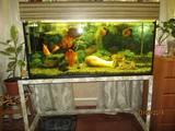 Рыбки, аквариумы Аквариумы и оборудование, цена 1200 Грн., Фото