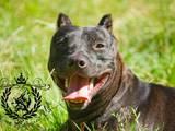 Собаки, щенята Невідома порода, ціна 2000 Грн., Фото