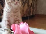Кошки, котята Турецкая ангора, цена 50 Грн., Фото