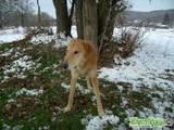 Собаки, щенки Разное, цена 400 Грн., Фото