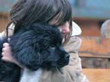 Собаки, щенки Ньюфаундленд, цена 4500 Грн., Фото