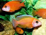 Рыбки, аквариумы Рыбки, цена 25 Грн., Фото