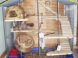 Грызуны Клетки  и аксессуары, цена 3000 Грн., Фото