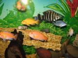 Рыбки, аквариумы Рыбки, цена 50 Грн., Фото