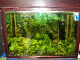 Рибки, акваріуми Акваріуми і устаткування, ціна 600 Грн., Фото