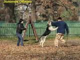 Собаки, щенки Восточно-Европейская овчарка, цена 8000 Грн., Фото