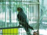 Попугаи и птицы Клетки  и аксессуары, цена 400 Грн., Фото