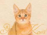 Кошки, котята Абиссинская, цена 45000 Грн., Фото