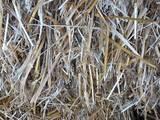 Гризуни Корм, ціна 30 Грн., Фото