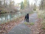 Собаки, щенки Ризеншнауцер, цена 2000 Грн., Фото