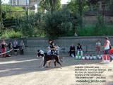 Собаки, щенки Немецкий дог, Фото