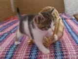 Кошки, котята Разное, цена 1 Грн., Фото