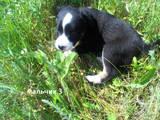 Собаки, щенки Разное, цена 50 Грн., Фото