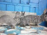 Животные Разное, цена 100 Грн., Фото