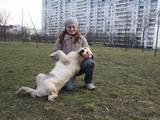 Собаки, щенята Притулки і готелі, ціна 50 Грн., Фото
