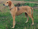 Собаки, щенята Різне, ціна 800 Грн., Фото