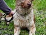 Собаки, щенки Бордерколли, цена 450 Грн., Фото