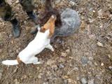 Собаки, щенки Жесткошерстный фокстерьер, Фото