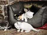 Кошки, котята Разное, Фото