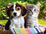 Ветеринария Ветеринары и ветеринарные клиники, цена 50 Грн., Фото