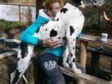 Собаки, щенки Немецкий дог, цена 13000 Грн., Фото