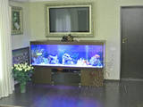 Рыбки, аквариумы Установка и уход, цена 180 Грн., Фото