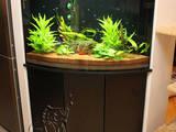 Рибки, акваріуми Акваріуми і устаткування, ціна 500 Грн., Фото