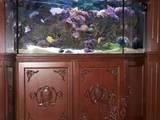 Рыбки, аквариумы Аквариумы и оборудование, цена 500 Грн., Фото