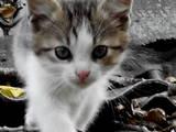 Тварини Різне, ціна 1 Грн., Фото